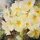 Primrose Posy by Ruth S Harris