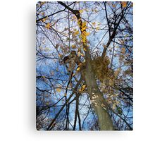 Autumn rememberance Canvas Print