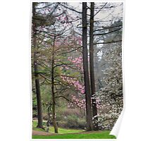 Blooming Marvellous Magnolia Tree  Poster