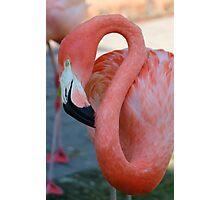 Flamingo 2 Photographic Print