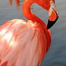 Flamingo 4 by Sheryl Unwin