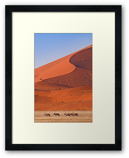 Life in the desert by Konstantinos Arvanitopoulos