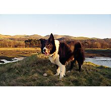 Evening stroll with  Indy Photographic Print