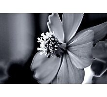 Tranquil Photographic Print