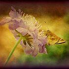 Flower Dancer by DottieDees