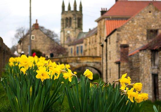Helmsley Daffodills by Trevor Kersley