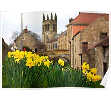 Helmsley Daffodills Poster