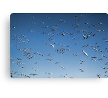 A sky filled with bird's Canvas Print