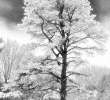 Long winter by strgaZeNn