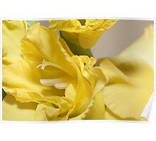 macro shot of yellow watsonia(Bugle Lily) Poster