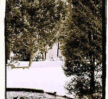 Swan pond by strgaZeNn