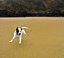 'The Wolf' at play.. by Mike  Waldron
