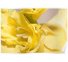 yellow watsonia(Bugle Lily) Poster