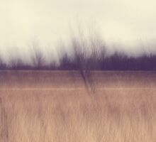 A Prairie Afternoon Kitty Todd Nature Preserve Impressionism by Mitch Labuda