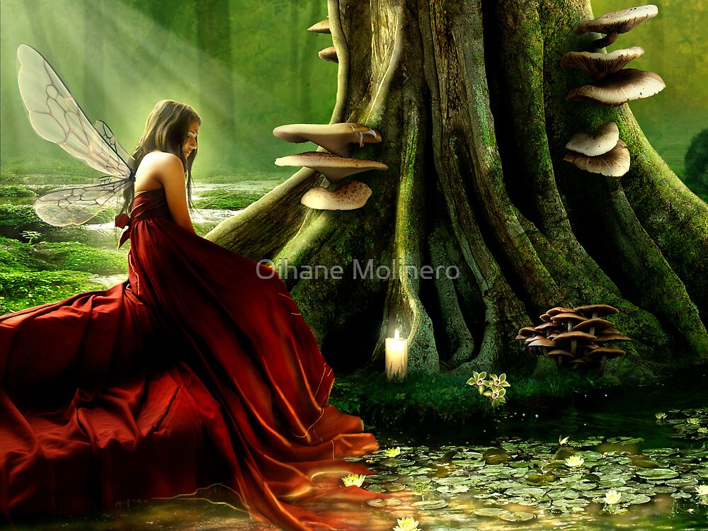 The Wisdom of Trees by Oihane Molinero