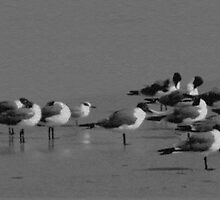 Seagulls Sunning by mrthink