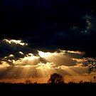 A Ray of Sunshine by Dawn di Donato