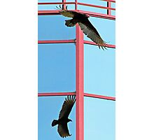Turkey vulture with shadow reflected in glass building Photographic Print