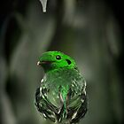 Curious Green-bird by virag