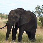 Elephant in the Serengetti by Ellen Rosen Singer