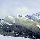 """""""Snowy Olympics"""" by Lynn Bawden"""