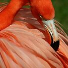 Flamingo 5 by Sheryl Unwin