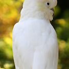 Sulpher Crested Cockatoo by Sheryl Unwin