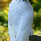 Sulpher Crested Cockatoo 2 by Sheryl Unwin