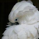 Moluccan Cockatoo by Sheryl Unwin
