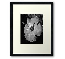 Hibiscus Black and Whitus Framed Print