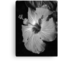 Hibiscus Black and Whitus Canvas Print