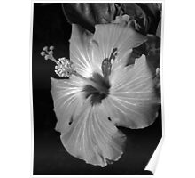 Hibiscus Black and Whitus Poster