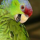 Amozon Lilac Crowned Parrot by Sheryl Unwin