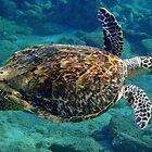 Hawksbill Turtle by Leon Heyns