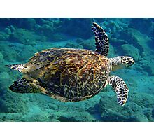 Hawksbill Turtle Photographic Print