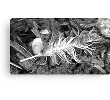 Wet Feather Canvas Print
