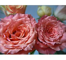 pinky double bloom Photographic Print