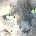My Amazing Wonderful Little Cat (1) by Susan  Morry