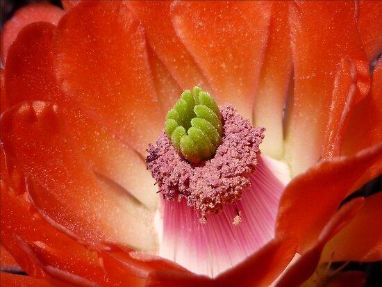 Desert Beauty by Lucinda Walter