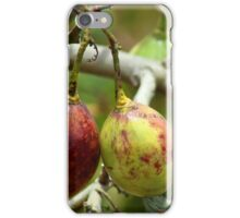 Tree Tomatoes in an Orchard iPhone Case/Skin
