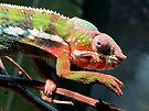 Panther Chameleon by Veronica Schultz
