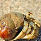 Hermit Crab by Kim McClain Gregal