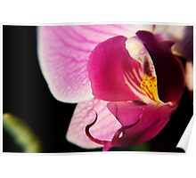 Pink Orchid 2 Poster