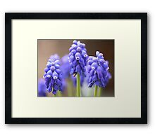 To Vole' in Blue Framed Print