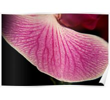 Pink Orchid 6 Poster