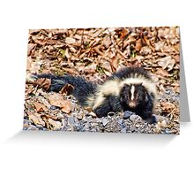Skunk Greeting Card