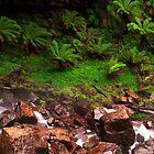 Bindaree Falls - Victorian Alpine Region by Paul Oliver