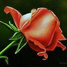 Rose by jsalozzo