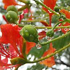 Post-storm Poinciana by amgmcpherson