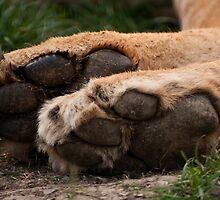 Tiny tootsies  by ©FoxfireGallery / FloorOne Photography